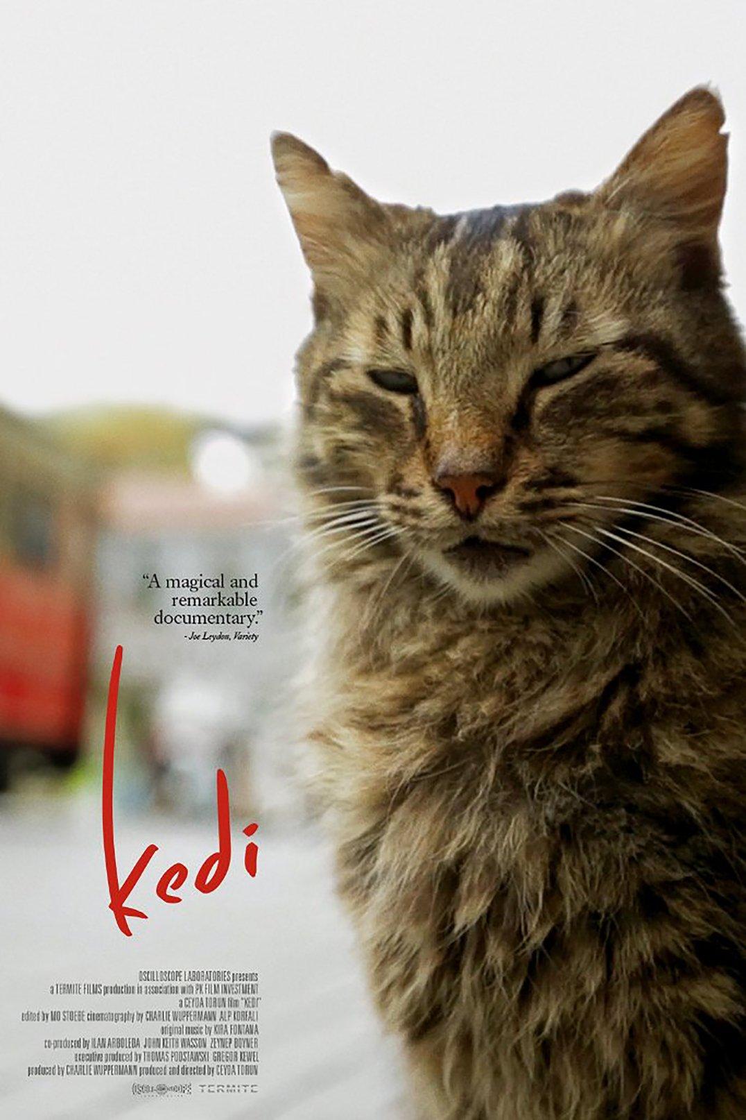 kedi des chats et des hommes